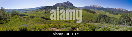 Wildflowers including Mule Ears Sunflower family and Blue Flax near Mount Crested Butte Colorado USA - Stock Photo