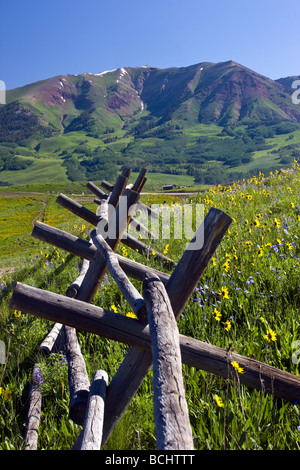 A fence lines a pasture full of wildflowers including Mule Ears, Lupine and Blue Flax near Mount Crested Butte Colorado - Stock Photo