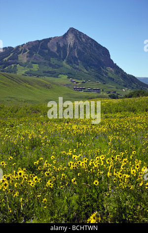 View from Snodgrass Mountain of wildflowers including Mule Ears Sunflower family and Blue Flax near Mount Crested - Stock Photo