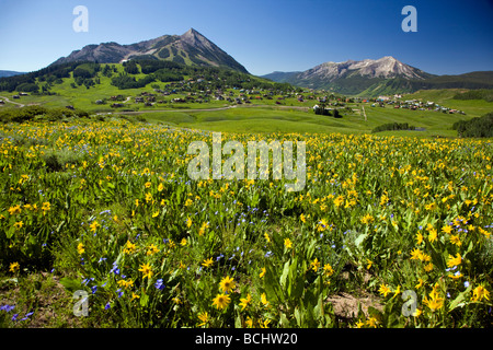View from Snodgrass Mountain of a pasture full of wildflowers including Mule Ears Sunflower & Blue Flax near Mount - Stock Photo
