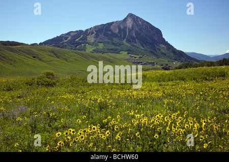 Pasture full of wildflowers including Mule Ears Sunflower family and Blue Flax near Mount Crested Butte Colorado - Stock Photo