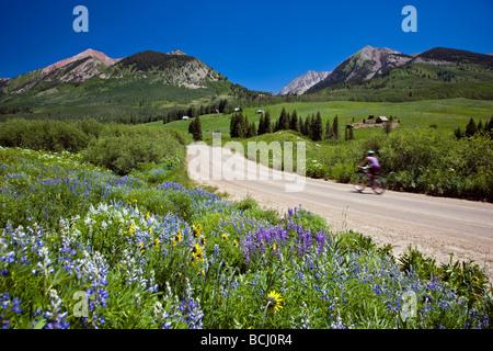 Wildflowers line Gothic Road Elk Mountains Colorado USA  Cyclist enjoys the mountains - Stock Photo