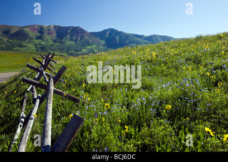 A split rail fence lines a pasture of wildflowers including Mule Ears Sunflower family and Blue Flax near Mount - Stock Photo
