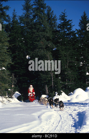 Santa Claus Mushing Dogs Woods Winter Southcentral AK - Stock Photo