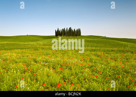 Tuscan landscape, Tuscany, Italy, RF - Stock Photo