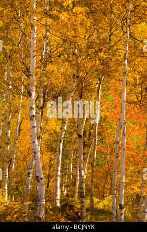 USA New Hampshire - Stock Photo