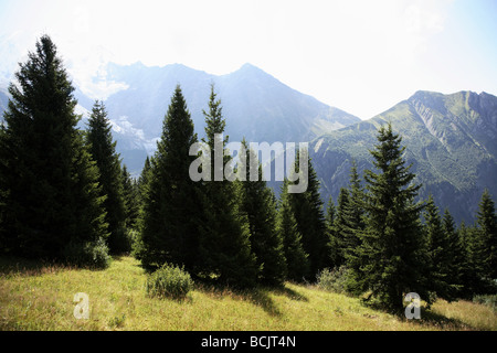 Conifers and mont blanc - Stock Photo