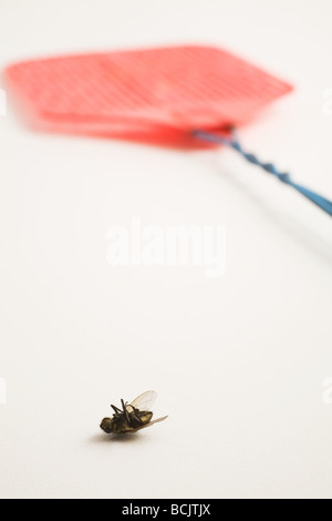 Dead fly and fly swatter - Stock Photo