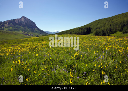View from Snodgrass Mountain of a pasture full of wildflowers including Mule Ears & Blue Flax near Mount Crested - Stock Photo