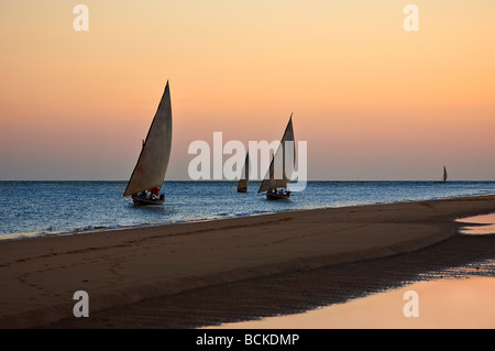 Kenya, Lamu. Traditional sailing boats off Shela on Lamu Island. - Stock Photo