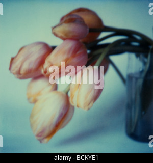 Tulips in a vase - Stock Photo