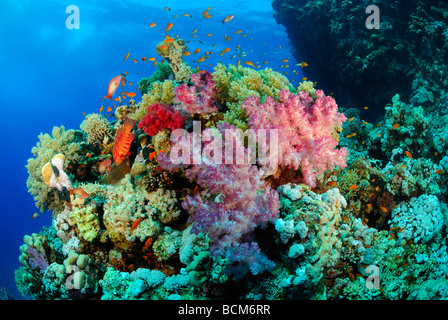 Coral reef in the Red Sea, off coast of Safaga - Stock Photo