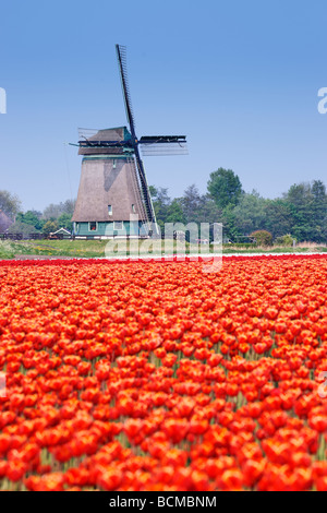 Polder windmill and red tulips near Alkmaar, North Holland, Netherlands. - Stock Photo