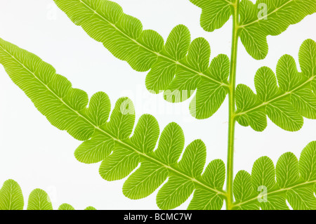 macro shot of partial view of spring fern isolated on white - Stock Photo