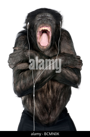 Monkey, Mixed Breed between Chimpanzee and Bonobo, 20 years old, listening to music on headphones in front of white - Stock Photo