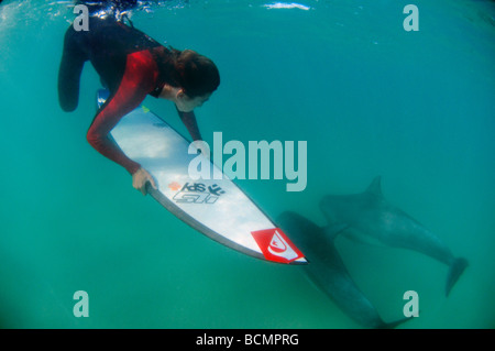 Surfer duck diving with dolphins - Stock Photo