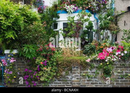 Urban front garden terraced house covered in flowers 47 Maynard Street Walthamstow London E17 HOMER SYKES - Stock Photo