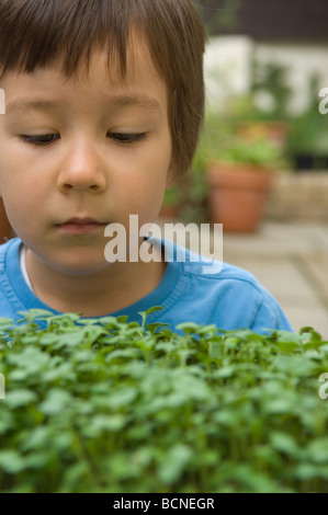 A six year old boy with cress grown in the garden at home, London, England - Stock Photo