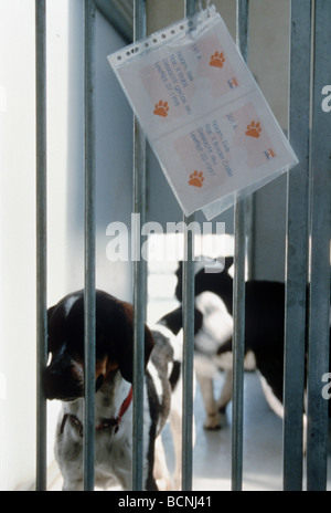Dogs left behind in an animal shelter in cages with information. These dogs will be killed as there is not enough - Stock Photo