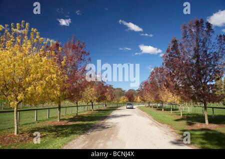 Autumn Colour Centennial Vineyards Bowral Southern Highlands New South Wales Australia - Stock Photo