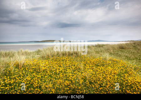 Wildflowers in the dunes Traigh Lingeigh North Uist - Stock Photo