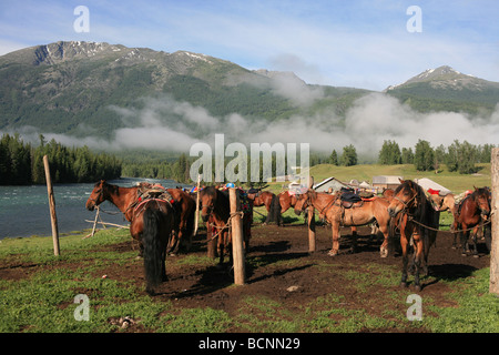 Horses tied at the pole beside wide river, Kanas Conservation, Xingjiang Uyghur Autonomous Region, China - Stock Photo