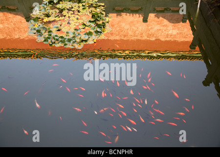 A pond in the Imperial Garden in the Forbidden City, Beijing, China - Stock Photo
