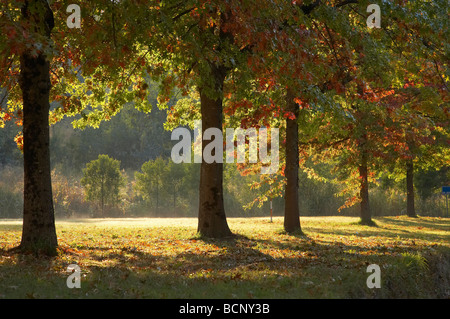 Autumn Trees Khancoban Snowy Mountains Southern New South Wales Australia - Stock Photo