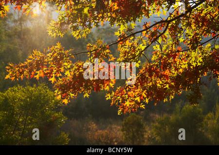 Autumn Trees Khancoban Snowy Mountains Southern New South Wales Australia - Stock Photo