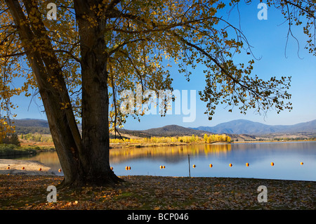 Trees at Boat Harbour Picnic Area Khancoban Pondage and Autumn Colour Snowy Mountains Southern New South Wales Australia - Stock Photo
