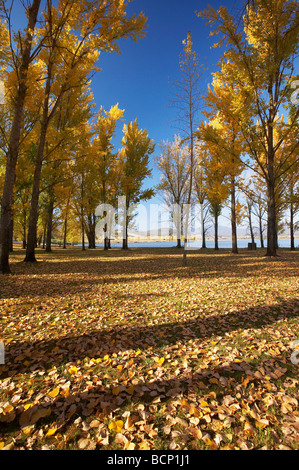 Autumn Trees at Boat Ramp Picnic Area by Khancoban Pondage Snowy Mountains Southern New South Wales Australia - Stock Photo