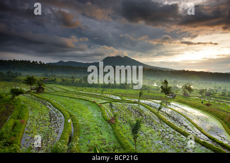 terraced rice fields near Tirtagangga at dawn with the sun rising over the volcanic peak of Gunung Lempuyang, Bali, - Stock Photo