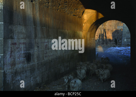 Sheep passing through the gateway of once important military outpost Zijing Pass on the Great Wall, Yi County, Hebei - Stock Photo