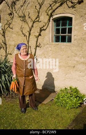 Frau in ihren Siebzigern mit Kopftuch trägt ein Bündel Mohrrüben - Stock Photo