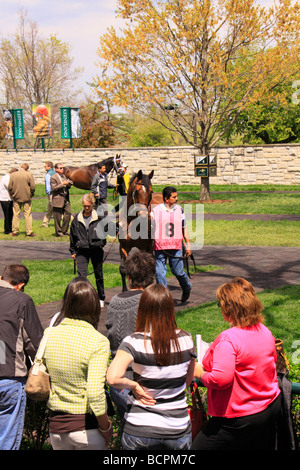 Spectators watch as thoroughbreds are walked in the paddock before a race Keeneland Race Course Lexington Kentucky - Stock Photo