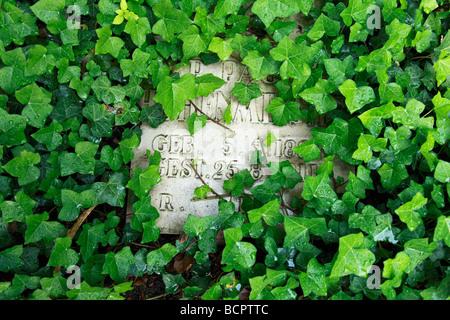 Grabstein mit Efeu bewachsen, Friedhof an der Katholischen Kirche Sankt Kamillus, Krankenhauskapelle des Kamillushauses, - Stock Photo