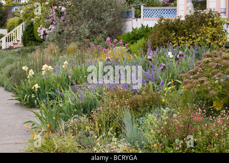 Captivating ... Amy Stewart S Front Yard Flowery No Lawn Cottage Garden In Eureka  California   Stock Photo