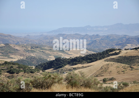 Landscape with olive groves, near Antequera, Malaga Province, Andalusia, Spain - Stock Photo