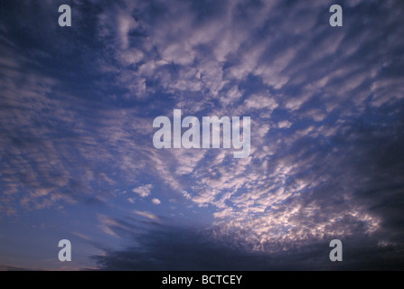 Altocumulus Clouds forming Mackerel Sky at Sunset, Illuminated Underneath by Setting Sun - Stock Photo