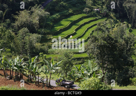 Rice paddies and vegetable fields in terrace cultivation, Bali, Republic of Indonesia, Southeast Asia - Stock Photo