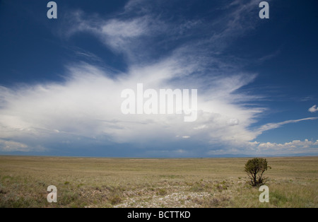 Mosca Colorado A lone tree stands in the San Luis Valley desert as a thunderstorm approaches - Stock Photo