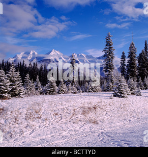 Animal Tracks in Snow and the Mitchell Range in Winter in Kootenay National Park in the Canadian Rockies British - Stock Photo