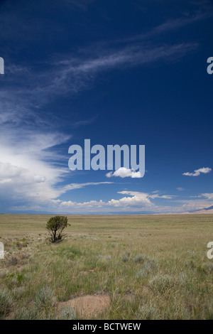 Mosca Colorado A lone tree stands in the San Luis Valley desert - Stock Photo