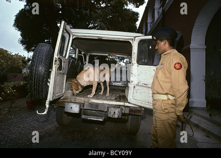 A drug sniffing dog trained by Pakistan's Anti Narcotics Force searches inside a truck - Stock Photo
