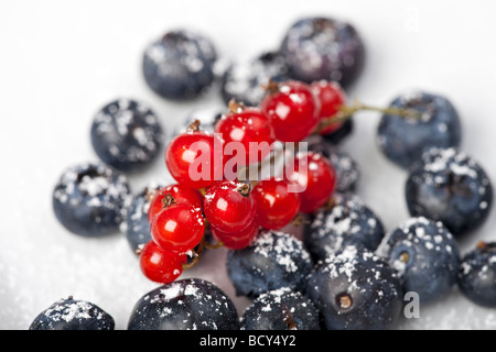 blueberries and red currant with icing sugar on white background - Stock Photo