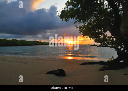 The sun rises from the Pacific Ocean, casting the mornings first light on a mangrove in the Galapagos Island of - Stock Photo