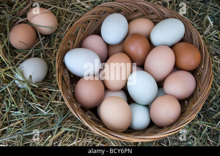 Chicken eggs in basket with hay,  natural colors. - Stock Photo