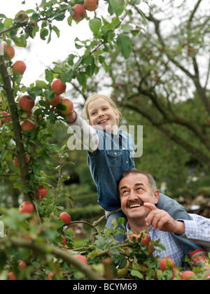 Man and girl picking apples on shoulders - Stock Photo
