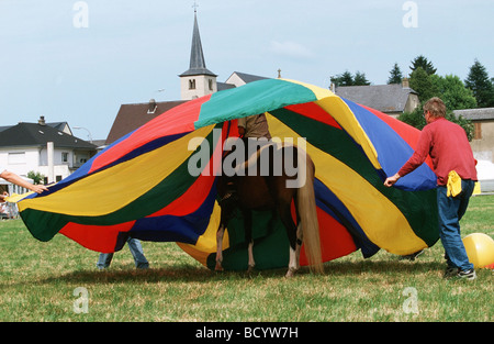 test Lewitzer horse with horsewoman under cloth - Stock Photo