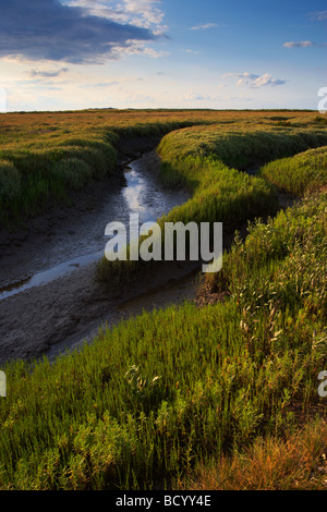 The Saltmarshes near Burnham Deepdale looking toward Scolt Head island Nature Reserve on the North Norfolk Coast - Stock Photo